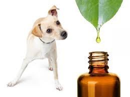 Huiles essentielles pour soigner son chien naturellement